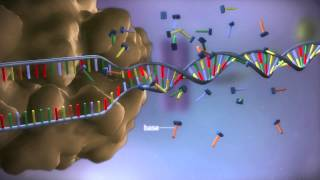 From DNA to protein - 3D