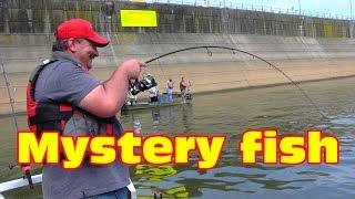 Big fish On: It