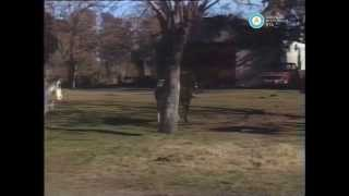 """""""Historias de la Argentina secreta"""": gauchos de Carmen de Areco, 1991 (fragmento)"""