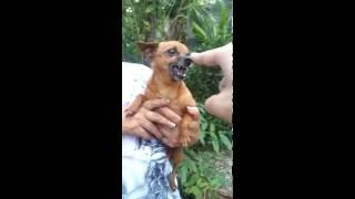 O Cachorro Flamenguista