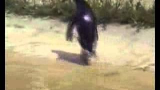 Penguin goes crazy