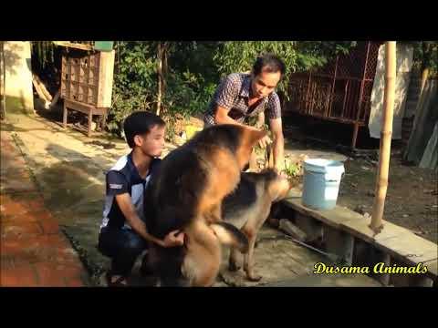 Xxx Mp4 Dog Horse Mating 2017 Funny Animals Funny Dog 3gp Sex
