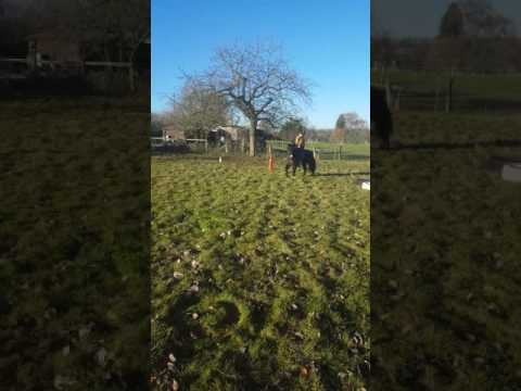 Me and poppy my cizons horse xxx