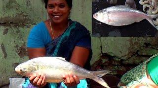 Woman Fish Cutting | Fish Cutting by Aunty | Amazing Cutting Pulasa Fish