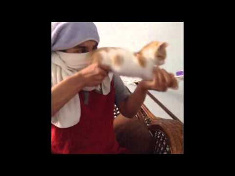 watch New funny cats Vines Compilation part 1