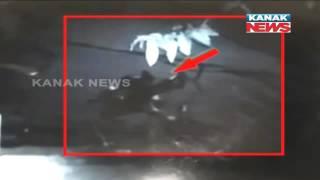 Nayapalli Murder Captured in CCTV