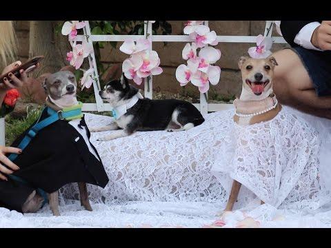 My Dogs Wedding