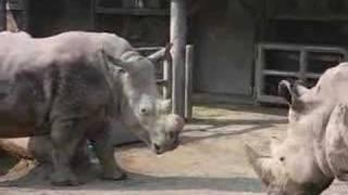Rhinoceros ad enmity.