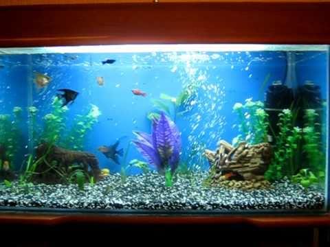 синий аквариум - song99.online