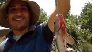 صيد سمك طنطا
