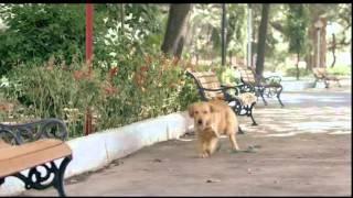 Glucovita Bolts Dog  1