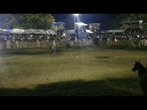 Xxx Mp4 Rayo De Luna Torneo De Lazo Sotuta 2017 3gp Sex