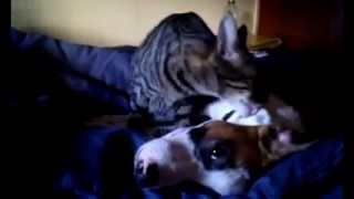 Pussy licking doggy love