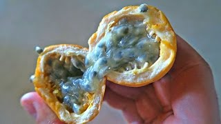 Passion Fruit Taste Test