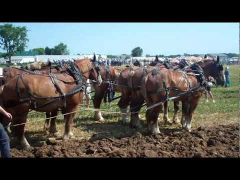 12 horse with 4 bottom plow