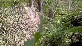 Berburu Babi Hutan Jateng Vercion 02