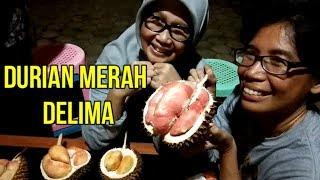 """""""Durian Merah Delima"""" Durian Unggulan Dari Banyuwangi"""
