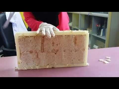 Raw Honeycomb pure and mature