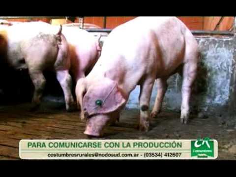 Alimentación Inteligente Cerdos Schauer P 3