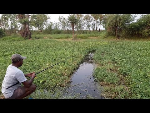 Xxx Mp4 Fish Hunting 3gp Sex