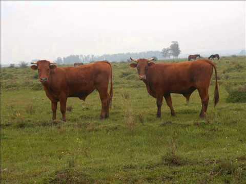 Fazenda de 1450 hectares para vender em Viamão RS.