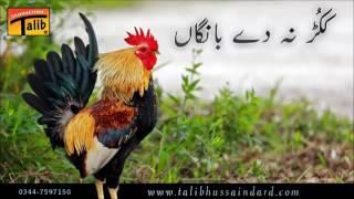 Talib Hussain Dard (ککڑ ںہ دے بانگاں)