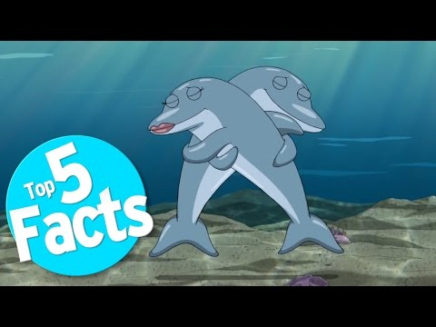 Top 5 Freaky Facts About Dolphin Sex