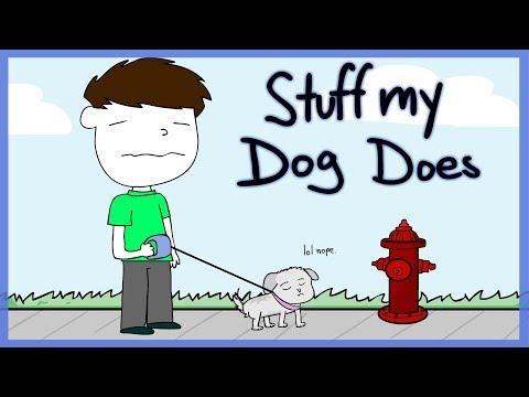 Stuff My Dog Does