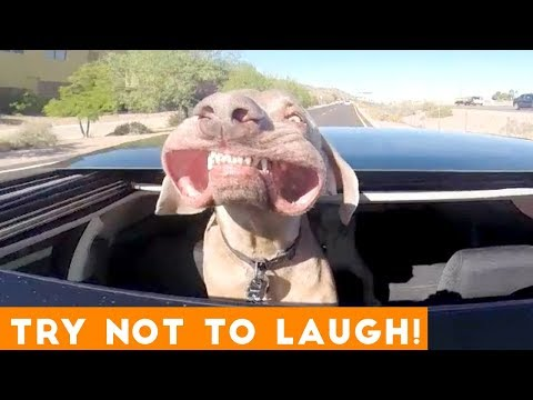 Xxx Mp4 Try Not To Laugh Funniest Animal Compilation August 2018 Funny Pet Videos 3gp Sex