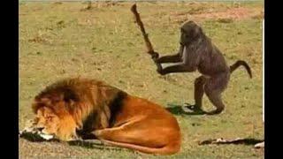 Prani Jagot Documentary (প্রাণীজগত নিয়ে ডকুমেন্টারী - কালাহারী রত্ন) - উপস্থাপনায় সাইফুল্লাহ মানসুর