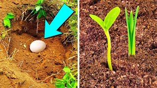 Put An Egg In Your Garden And See What Will Grow