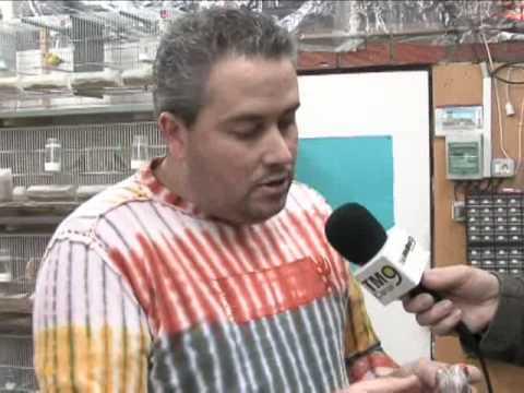 Campeón del Mundo de Canaricultura en color