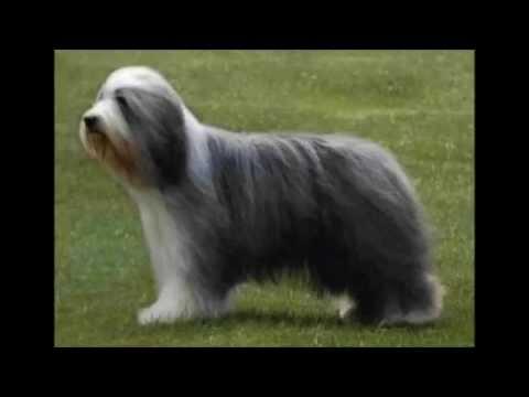 las 10 razas de perros mas caras del mundo