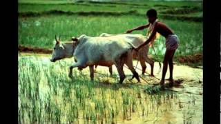 Amazing Images of Beautiful Bangladesh