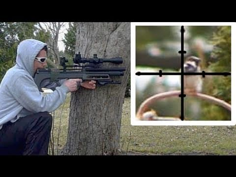 English Sparrow pest eradication from bird feeder