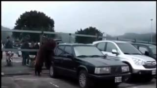 The Best Fails Moments - Pig fucking a car