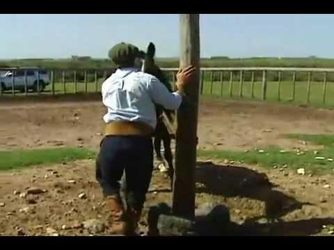 Caballos domados en Uruguay