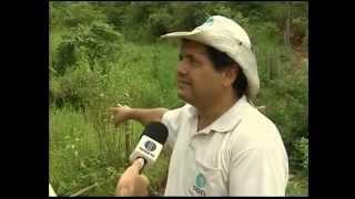 Projeto Olhos D'água ajuda a recuperar nascentes em Aimorés   G1 Minas Gerais