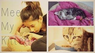 Meet My Kitten!♥
