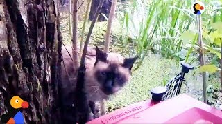 SCARED Cat Rescued From Swamp after Hurricane Harvey Floods | The Dodo