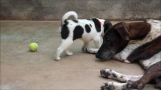 Dog Channel Cutest puppy rescued with injured mom at Animal Aid, India