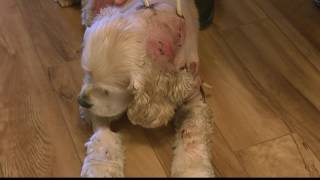 Hero cat saves dog during vicious attack