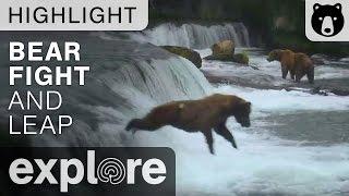 Bear Fight at Brooks Falls Then Bear Jumps Off Waterfall! - Live Cam Highlight