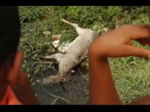La realidad de los burros y caballos de Cartagena Parte 2 de 3