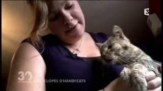 Association Handi'cats - 30 Millions d'amis