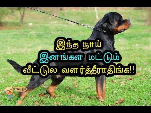 Xxx Mp4 இந்த நாய் இனங்கள மட்டும் வீட்டுல வளர்த்தீராதிங்க Dangerous Dogs Tamil Info 2 0 3gp Sex