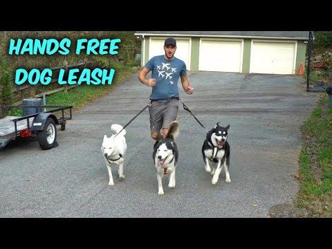 Xxx Mp4 My Husky Trying Hands Free Dog Leash 3gp Sex