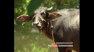 Impact of drought : Kalikavu river in Malappuram dried - വേനലില് വറ്റിവരണ്ട് കാളികാവ് പുഴ