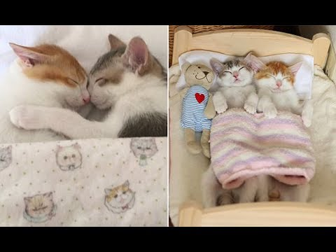 Sleeping cuties! Adorable brother and sister kittens can't sleep unless they cosy up together in bed