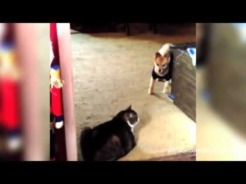 Compilation Of Scaredy Dogs Terrified Of Walking Past Cats
